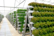 Pegasus Hydroponics Investment Picture 1
